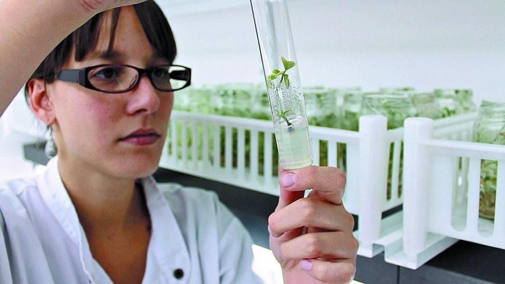 foto de derivados de la soja