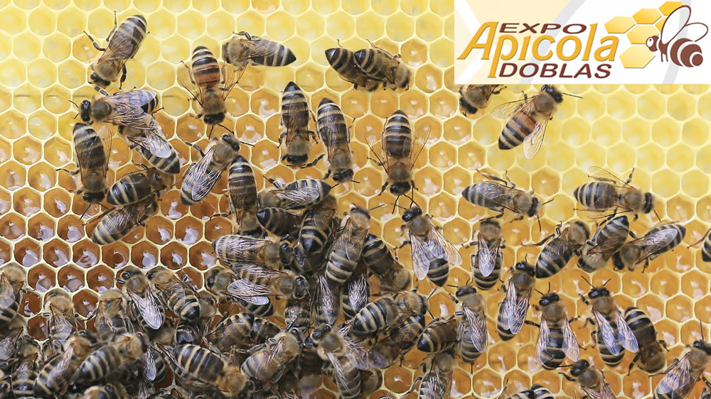 Expo apícola Doblas
