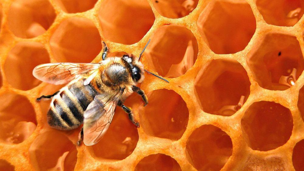 abeja en panal