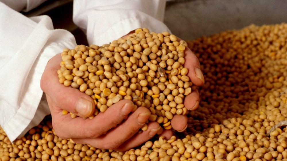 Juntando granos de soja