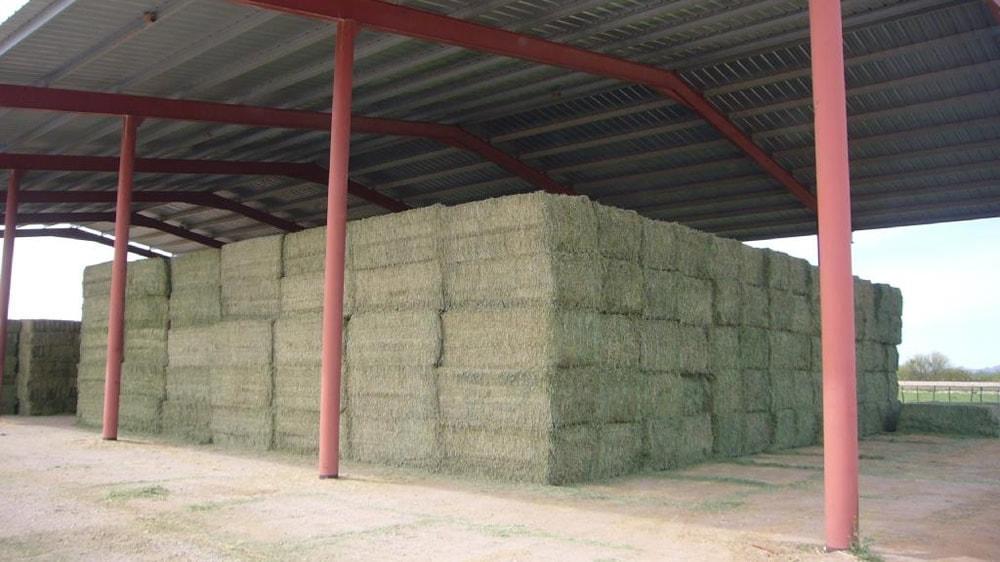 Alfalfa para exportación