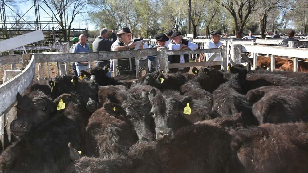 Productores ganaderos en remate feria de Nestor Hugo Fuentes