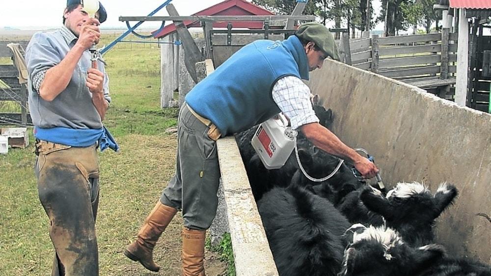 Control de las parasitosis en vacas