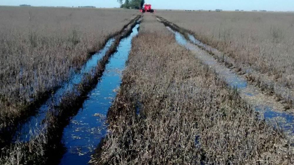Campo de trigo inundado