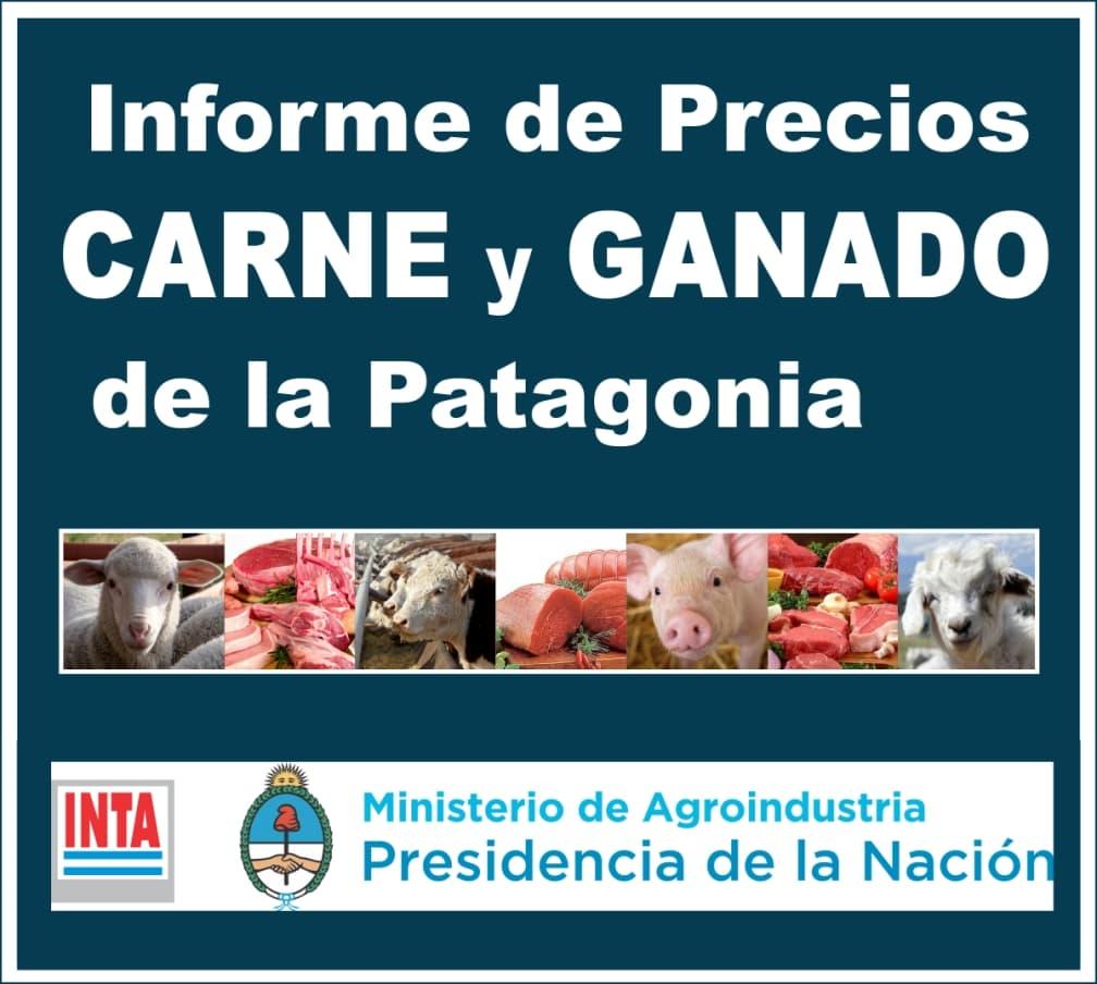 informe de precios carne y ganado de la patagonia