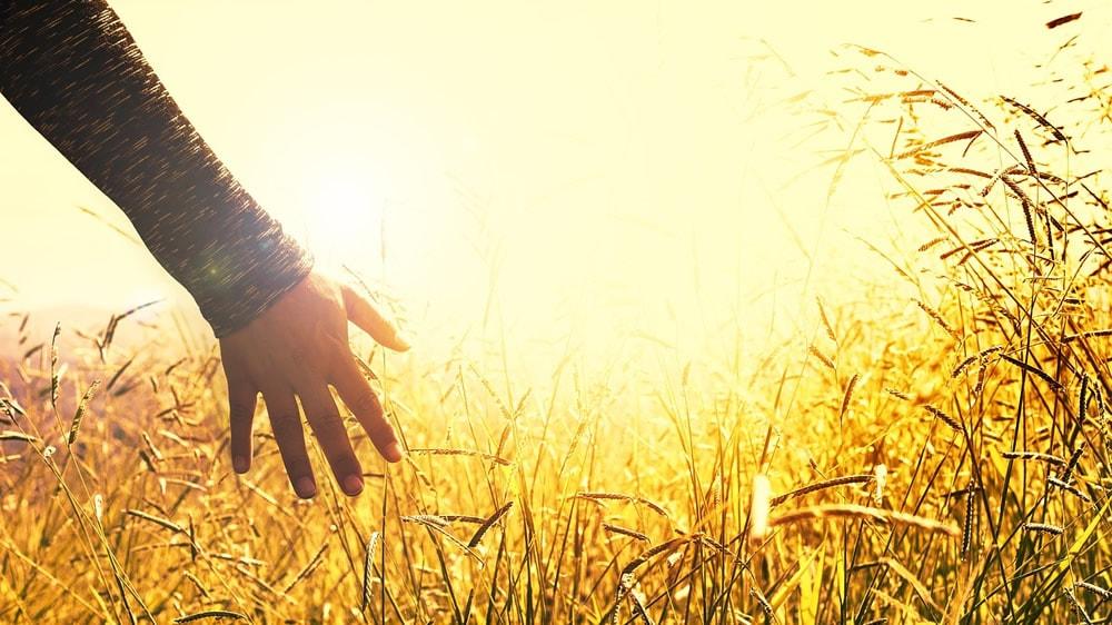 Tocando las hierbas en el campo