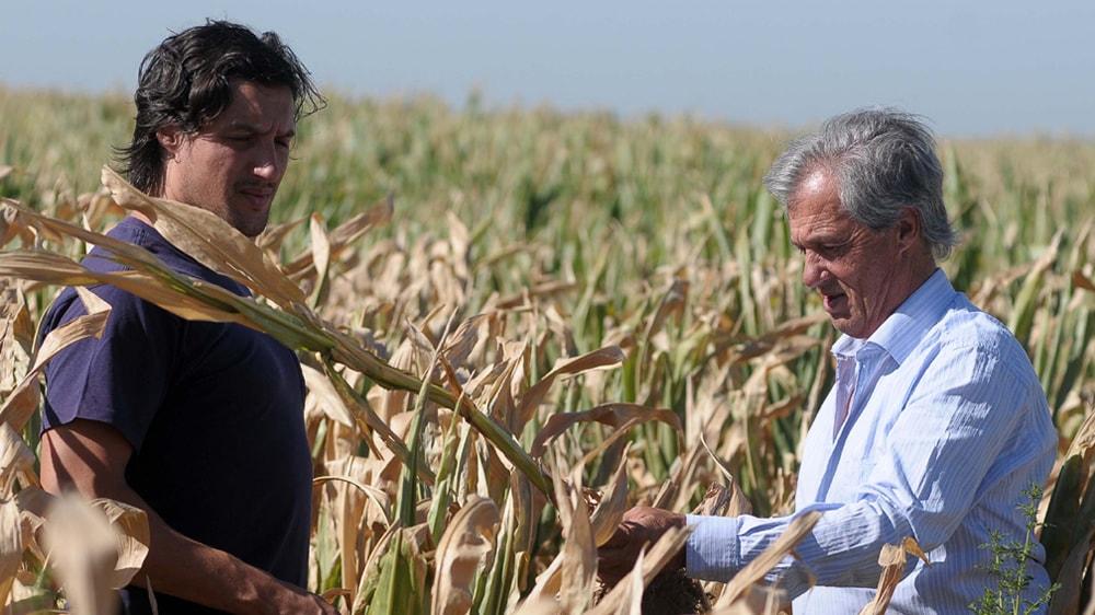 Productores agropecuarios entre los cultivos de maíz