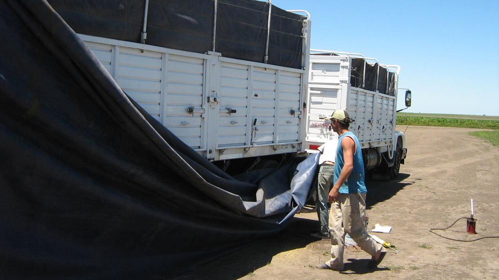 Camioneros transportadores de granos