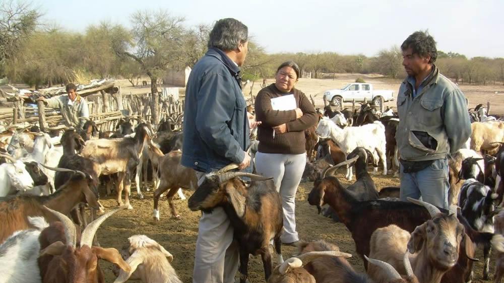 Cabras en zonas áridas