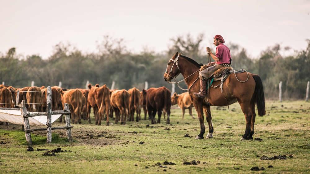 Empleado rural cuidando las vacas