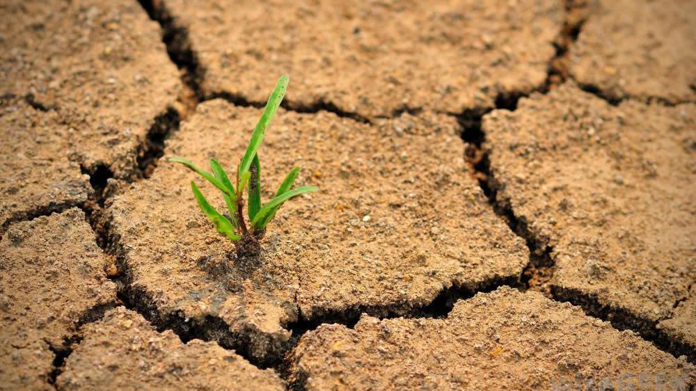 Planta creciendo en un suelo con sequía