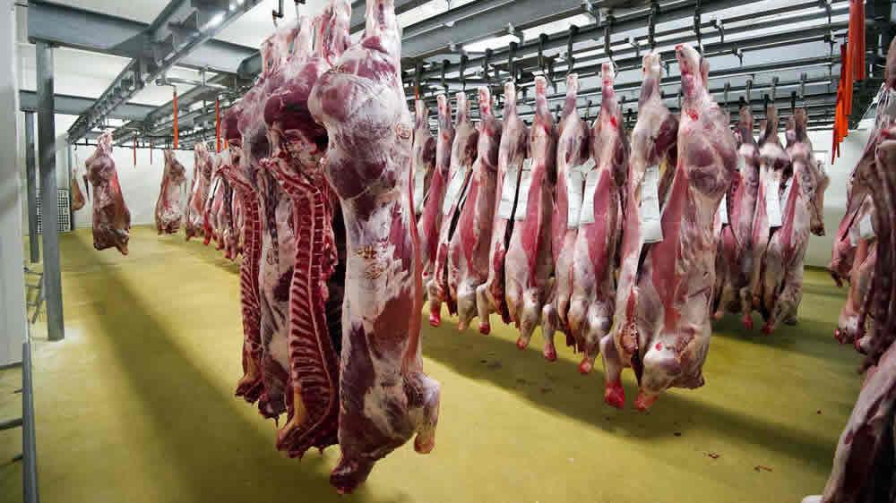 Carne bovina colgada en el frigorífico