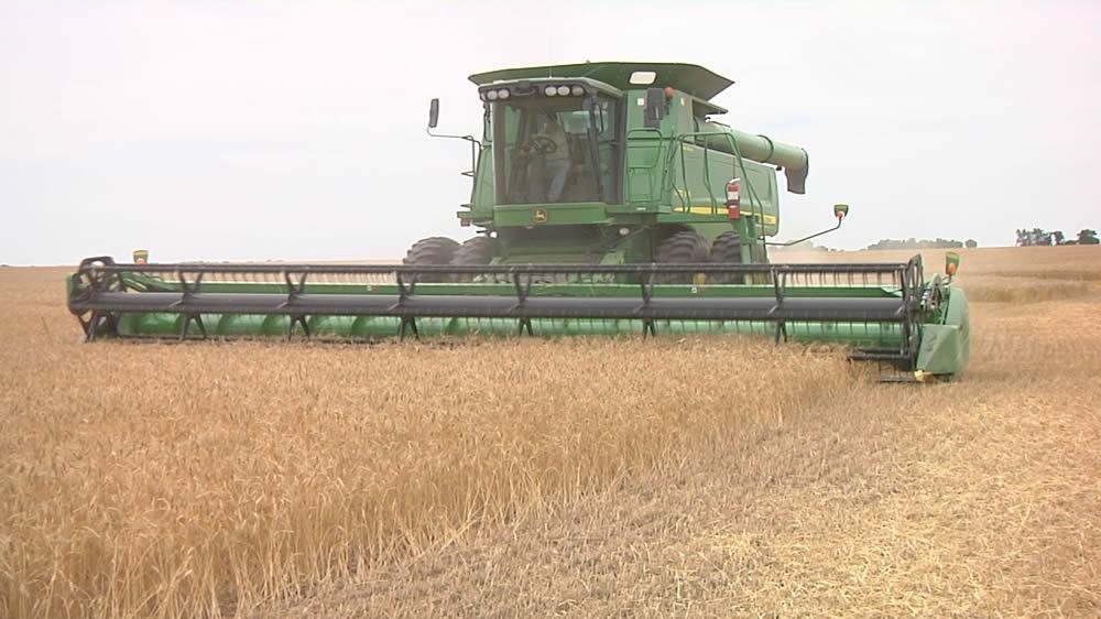 Cosechando trigo