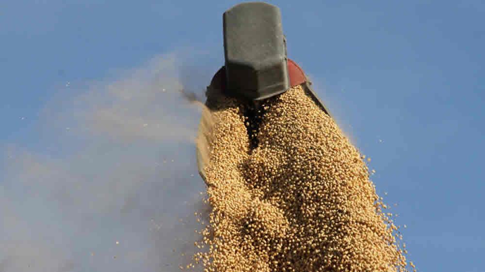 Granos de soja