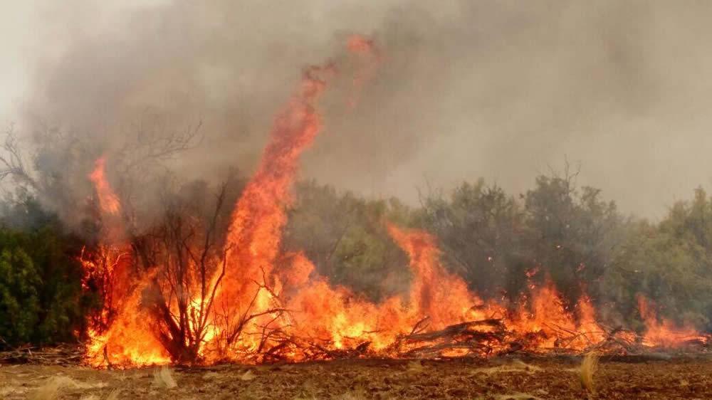 Incendio en campo de La Pampa