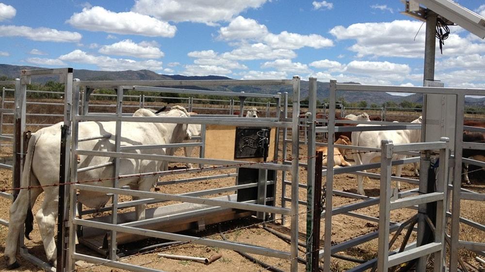 Sistema de ganadería de presición
