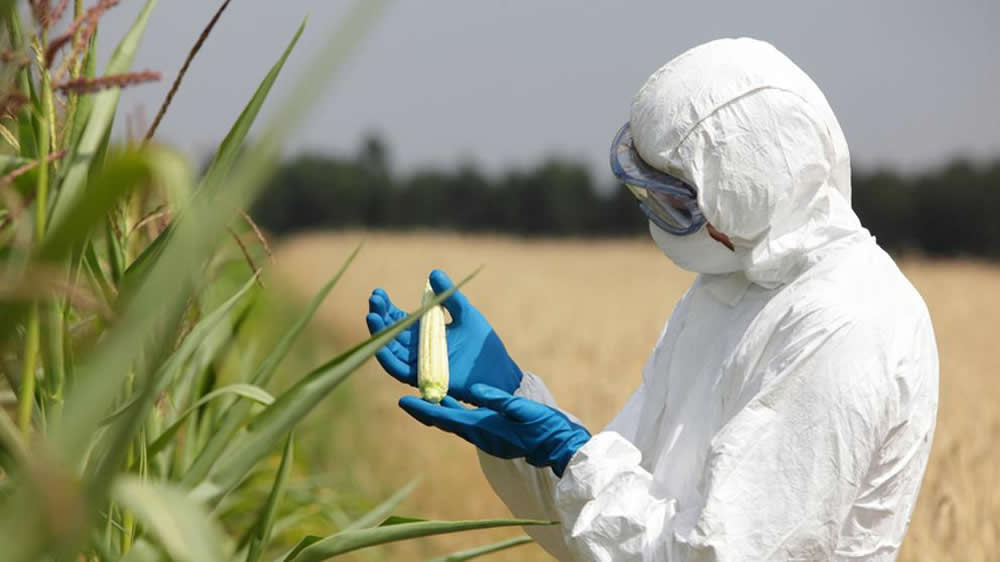 Analizando plagas en cultivos