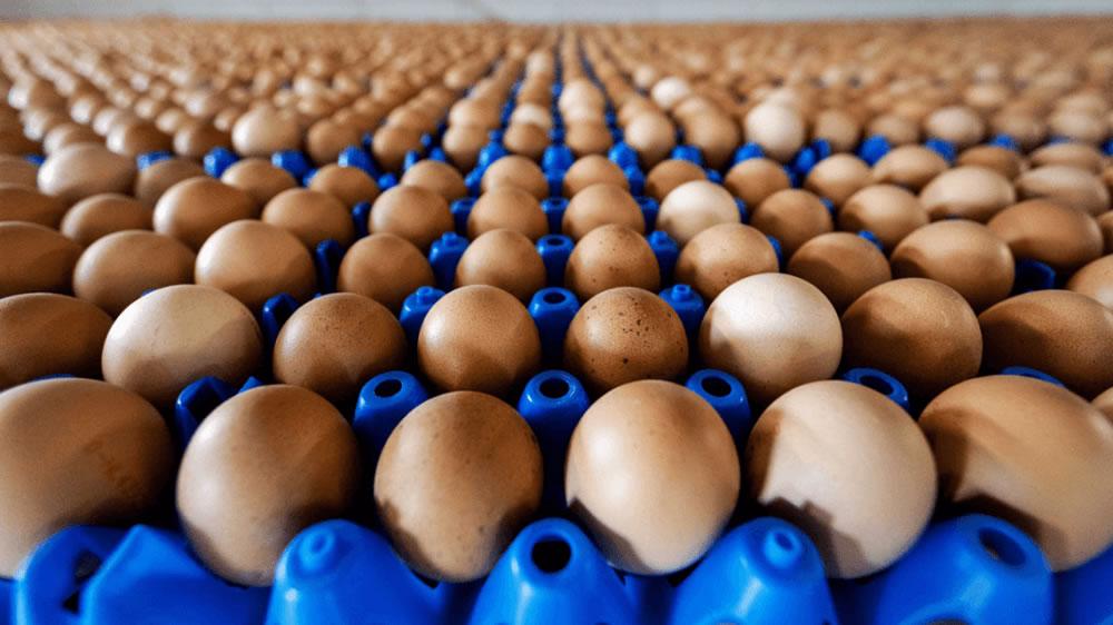 Huevos colorados