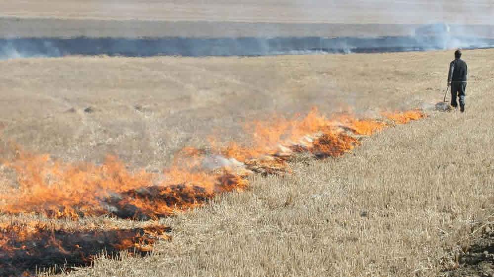 Fuego autorizado en el campo