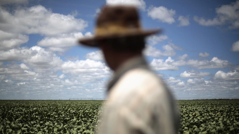 Productor agrícola observando sus cultivos