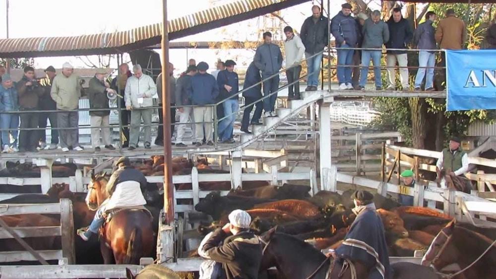 Remate de bovinos en mercado de Liniers