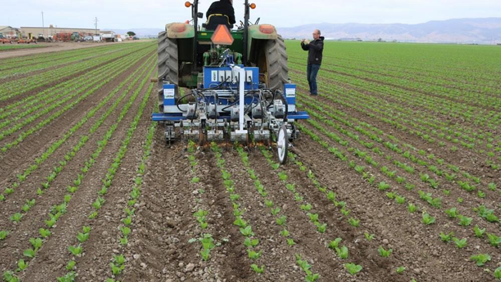 Robot para arrancar malas hierbas
