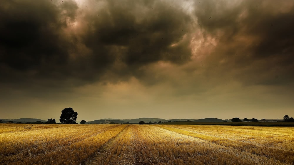 Tormenta en campo de trigo