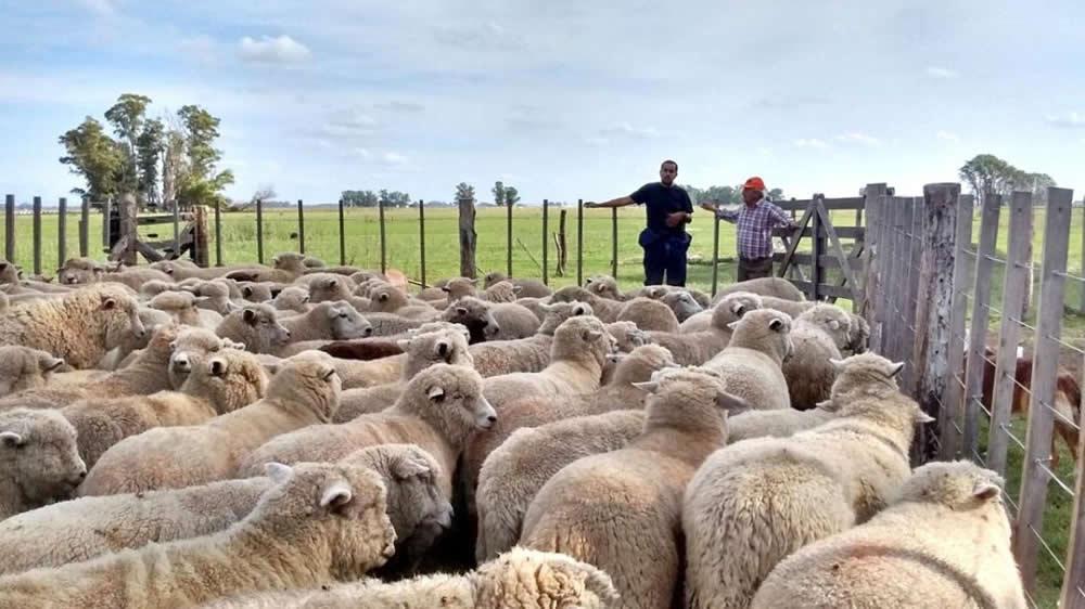 Establecimiento ovino