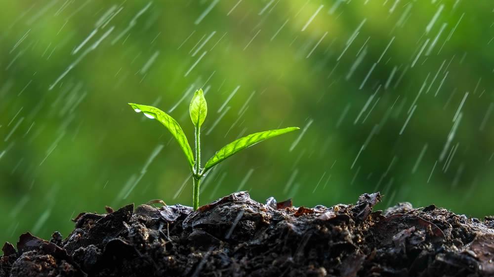 Lluvia cayendo en pequeña planta