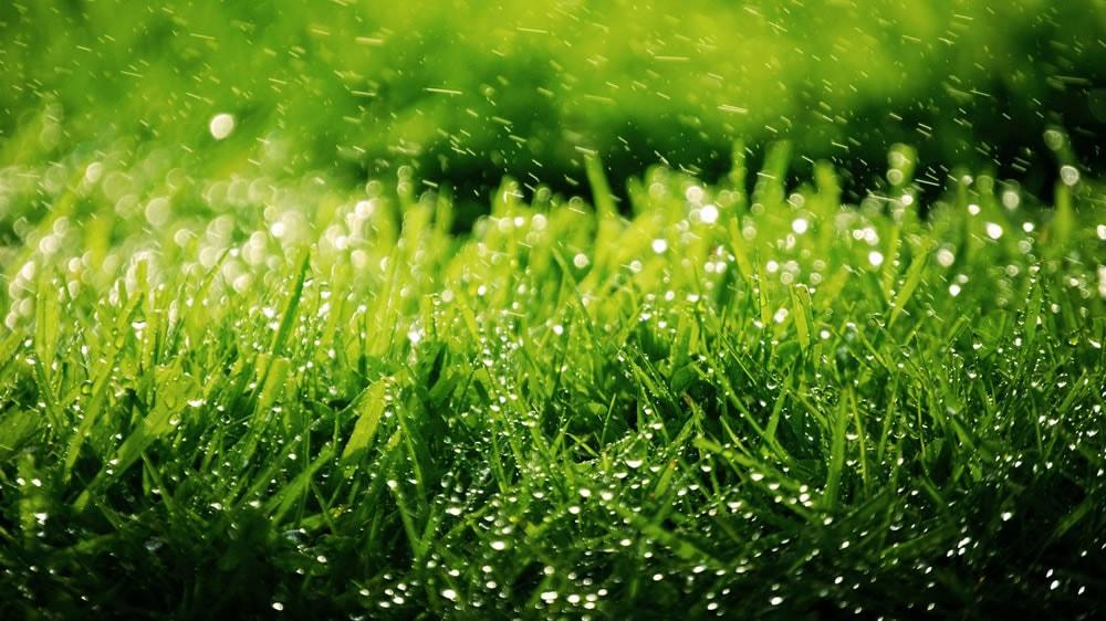 Lluvia cayendo en el pasto
