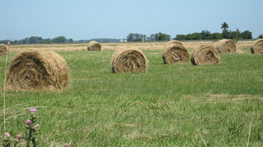 Rollos de pasto en el campo