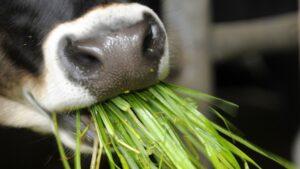Curso virtual del IPCVA: Plantas tóxicas para el ganado