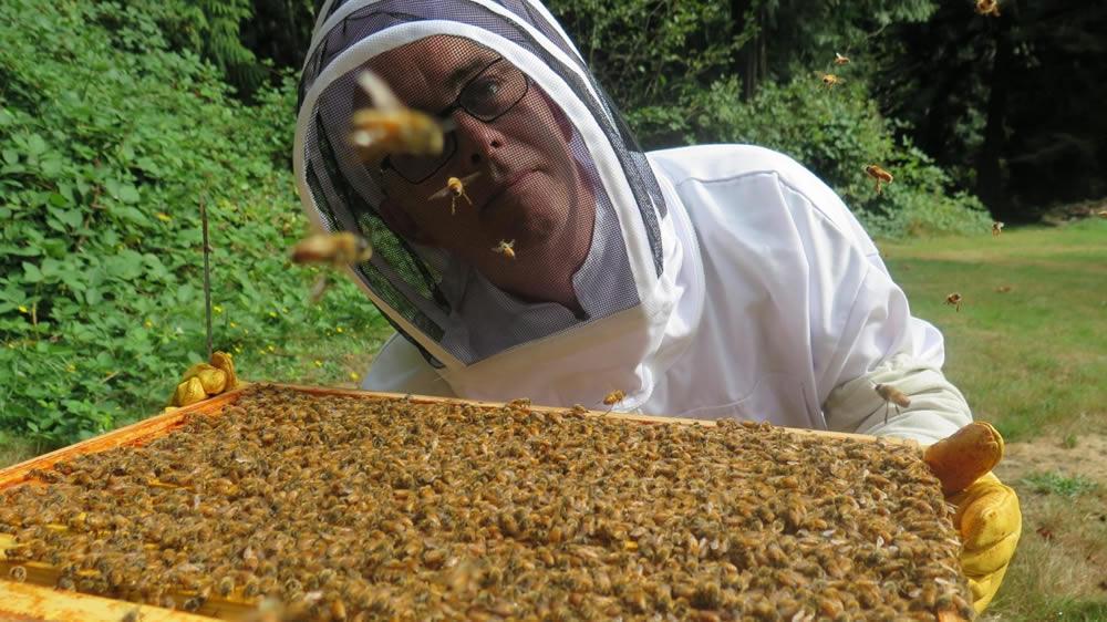 Apicultor y abejas