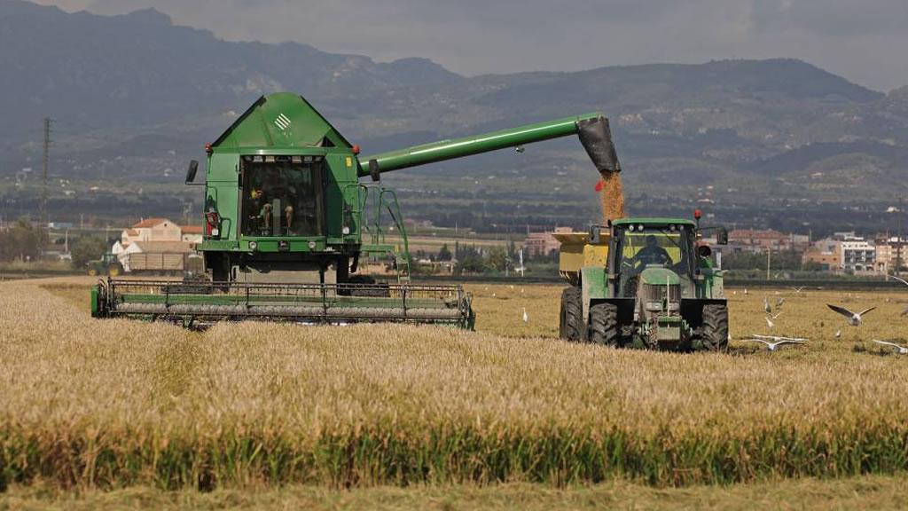 En La Pampa, proyectan un crecimiento del 25% en la producción de maíz