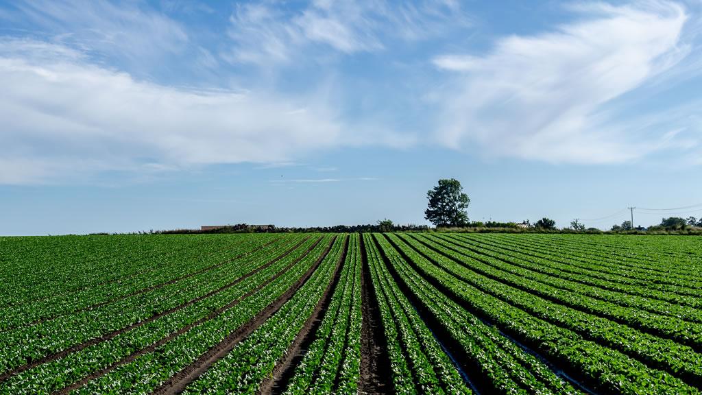 Ruta del cereal: firman convenios y licitación de obras de pavimentación