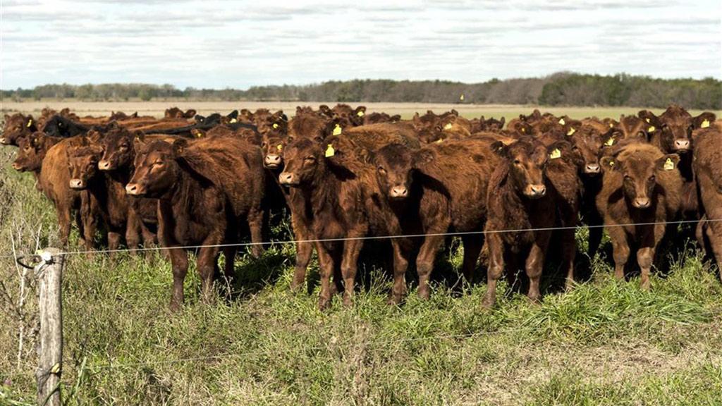 La ganadería extensiva puede reducir hasta un 30% las emisiones de gases de invernadero